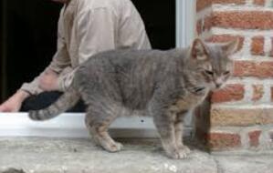 Wolu1200 : L'avenue Gilbert Mullie dit adieu au chat Gribouille