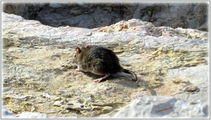 Le rat et la mouette