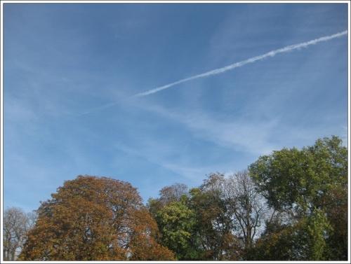Le ciel et le marronnier,