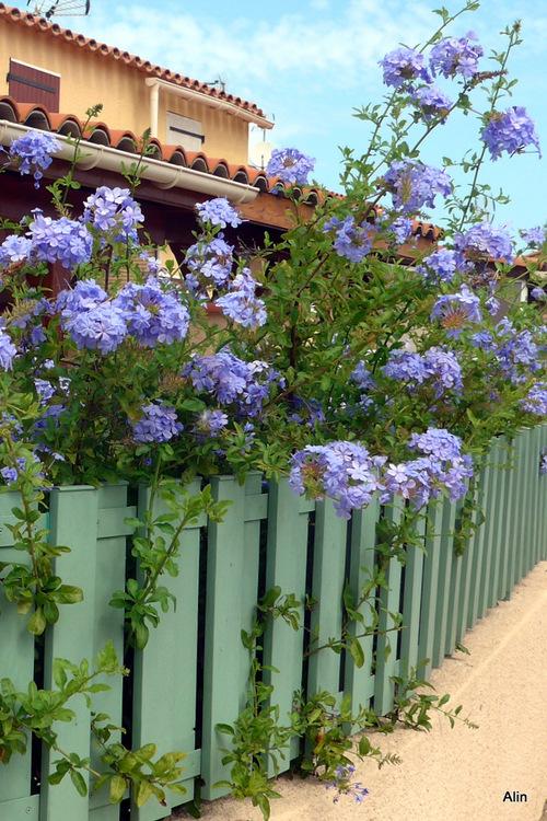 Une clôture bien fleurie !