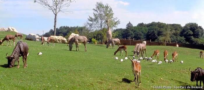 Top 5 des plus beaux parcs animaliers et zoos de France