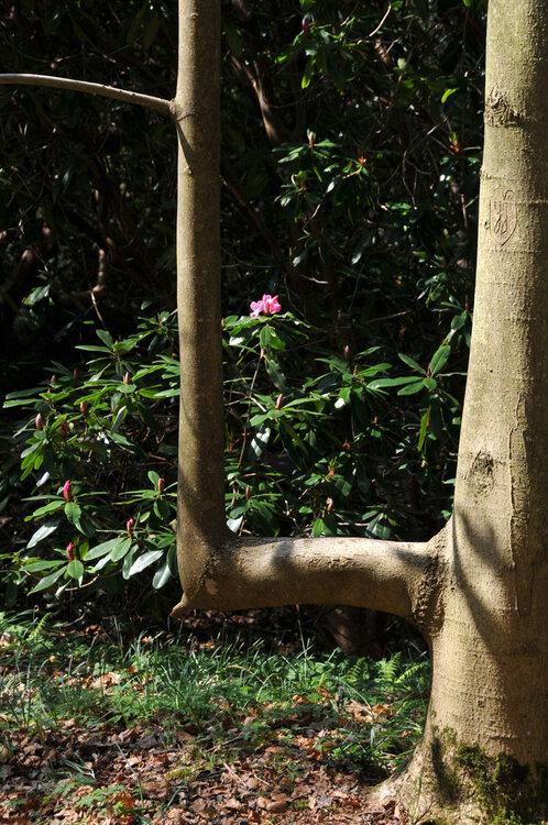 Le bois des Moutiers