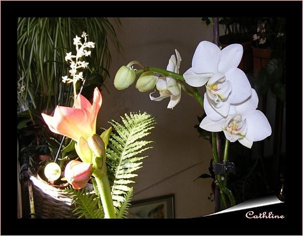 trio-de-plantes.jpg