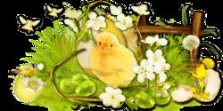 Les plumes d' Asphodèle : le retour