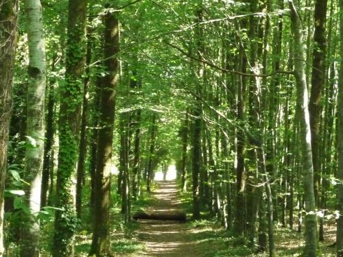 promenade en Vendée