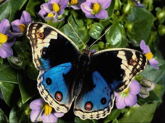 Résultats de recherche d'images pour «papillons»