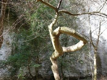 Un arbre bien curieux