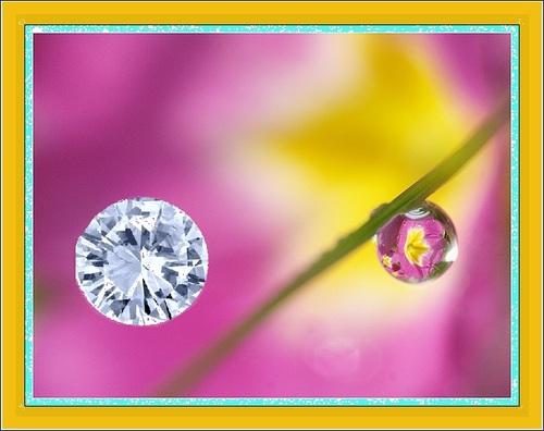 Le diamant et la Goutte de Rosée