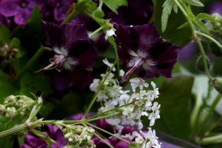 La mariée adorait le lilas