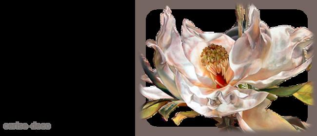design magnolia