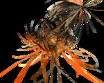 C4D orange