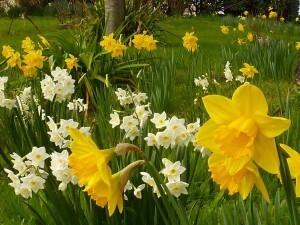 Ploubazlanec mars 2011 015