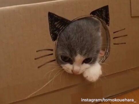 Sa premiére maison de chat !