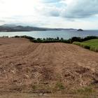La Batterie, Presqu'Île de la Caravelle, après la coupe - Photo : Yvon