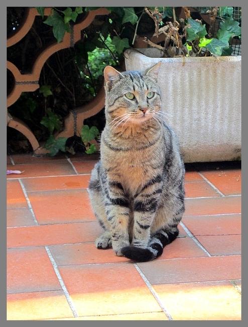 Tout, tout, tout, vous saurez tout sur... les Huiles Essentielles et les Chats