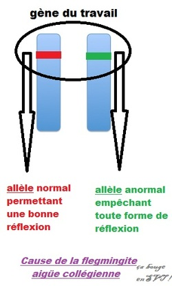 4 : Les chromosomes