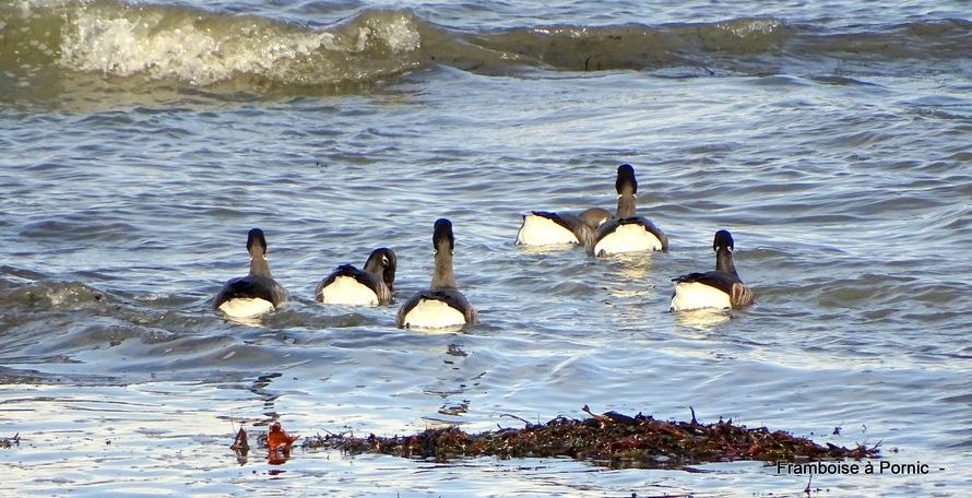 Oiseaux de la Tara à la Plaine/mer - 44 -