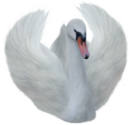 Zwierzaczki -klipardy