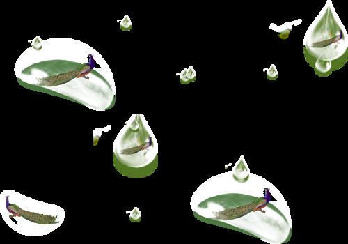 Tubes bulles de Paon