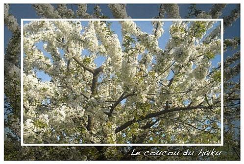 P74-Cerisier