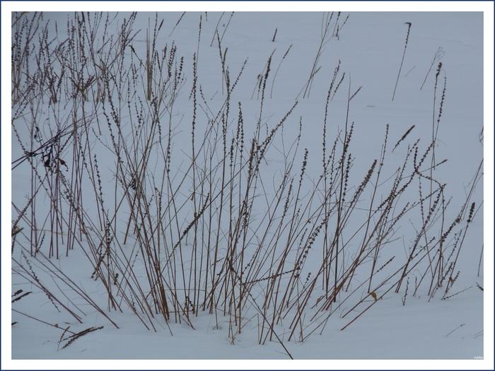 Photo de la semaine, regard sur neige. (Communauté d'Amartia)