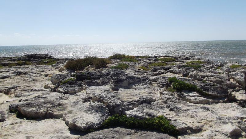 Dans l'autre sens, vers le sud-ouest (à droite des cabanes de pêche) un paysage vaguement herbeux, qui me surprend...