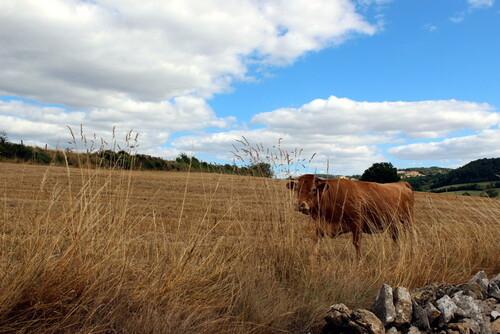 C'est l'été dans les champs