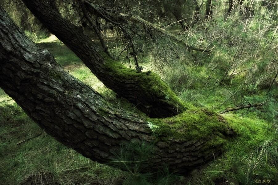 Ce n'est pas la forêt de Brocéliande...