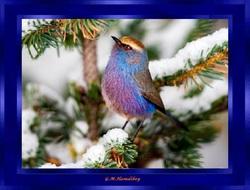 Sublime mésange multicolore