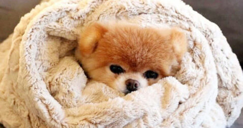 """Résultat de recherche d'images pour """"dog"""""""
