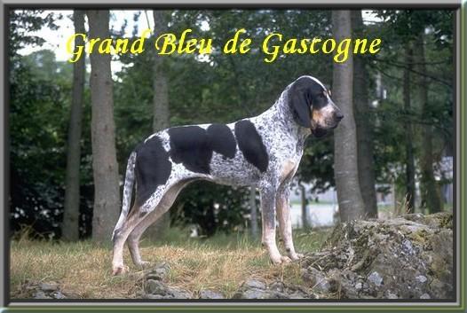 grandbleu1291392099