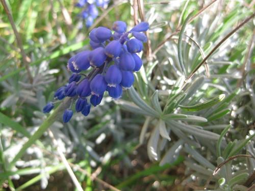 Les fleurs du samedi : la nature se réveille