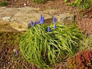 Ploubazlanec mars 2011 022