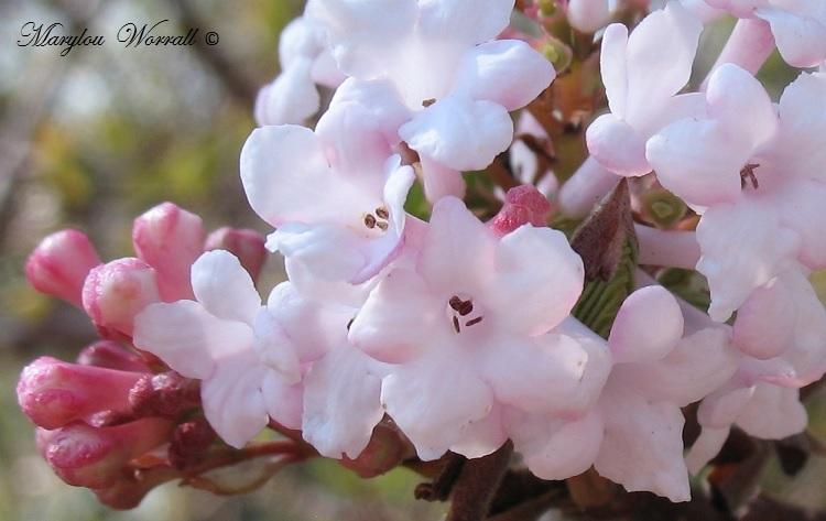 Fleurs au parc