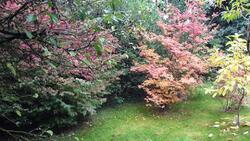 Les couleurs d'automne arrivent !