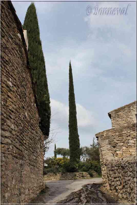 Oppède-le-Vieux Vaucluse bel encadrement pour un cyprès majestueux