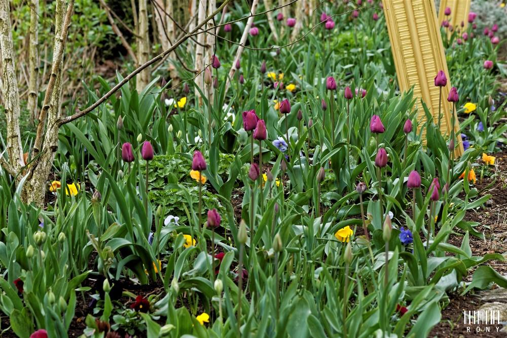 Pairi Daiza au printemps