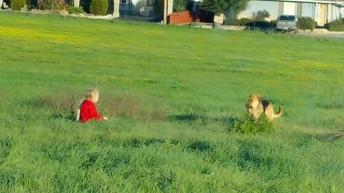 (-*♥*-)  Une petite fille de 6 ans réussit l'exploit de secourir un chien que personne ne pouvait approcher