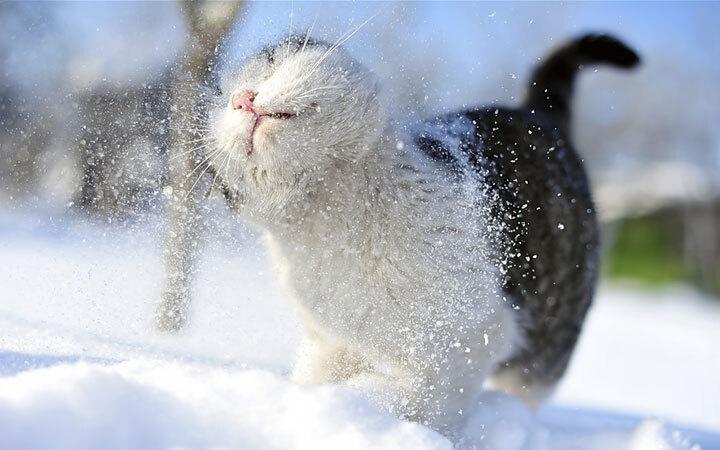 xx-animaux-dont-la-beaute-est-sublimee-par-les-couleurs-hivernales30