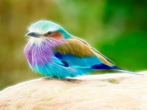 Image fractale d'oiseau.