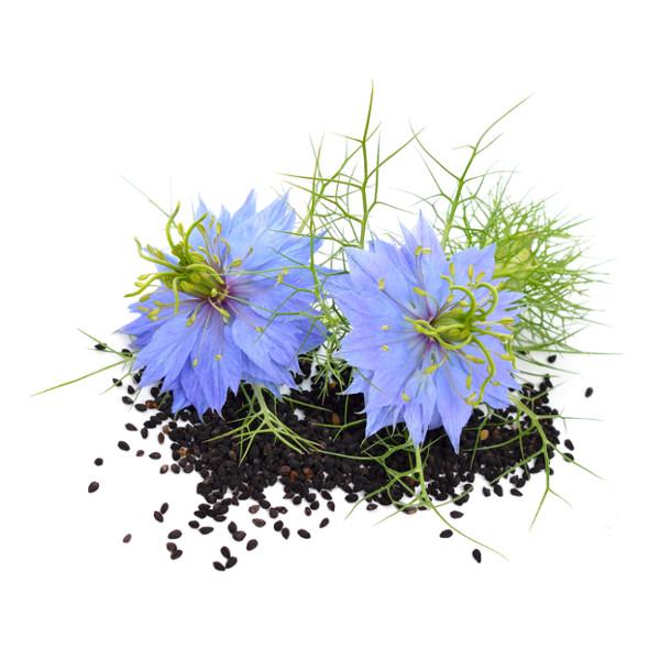 Quelques liens utiles for Plante nigelle
