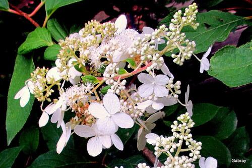 Saint Cyprien : le jardin botanique ... n2