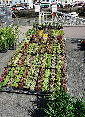 Marche-aux-vegetaux-17-6-12-P1270455.JPG