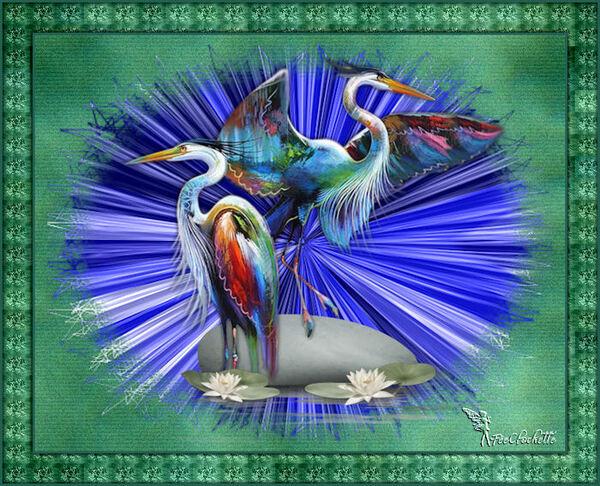 Jolis oiseaux