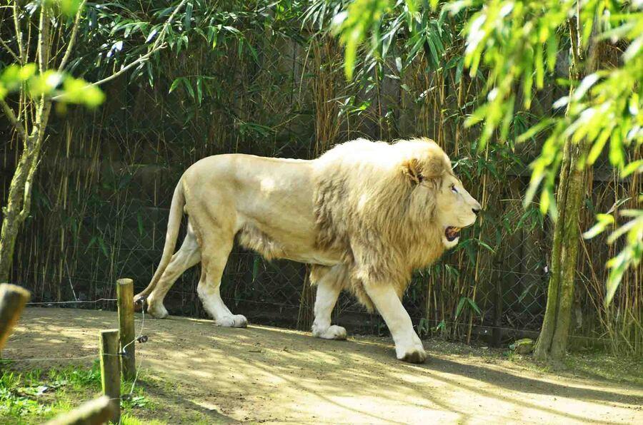 « Zoo de la Flèche »