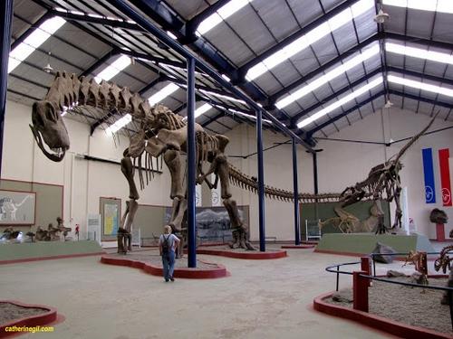 Le Giganotosaure