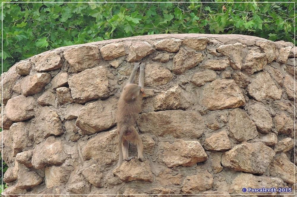 Zoo du Bassin d'Arcachon à La Teste - Août 2015 - 9/12