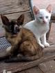 chats de Fukuoka