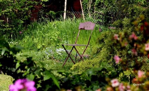 En mode confinement -8 : scènes de jardin...