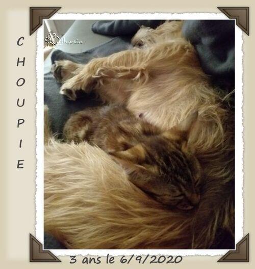 La famille s'agrandit et les 3 ans de Choupie